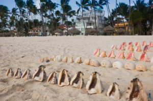 seashells lined up on the beach